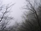 ballade dns la brume