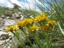 1232 fleur jaune